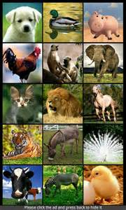 Animal Sound Ringtones
