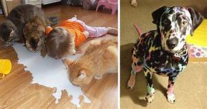 20 Reasons Why You Shouldn U2019t Leave Your Pets With Kids