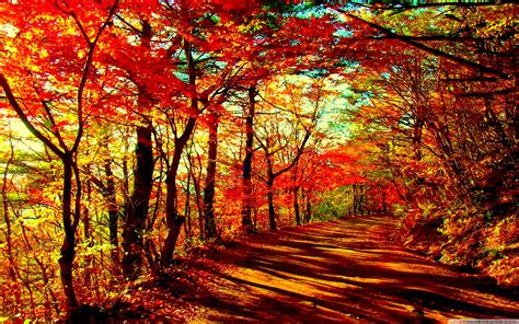 Autumn 4k Uhd Wallpapers by Autumn Forest Wallpapers Top Free Autumn Forest