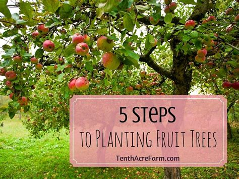 5 Steps To Planting Fruit Trees  Tenth Acre Farm