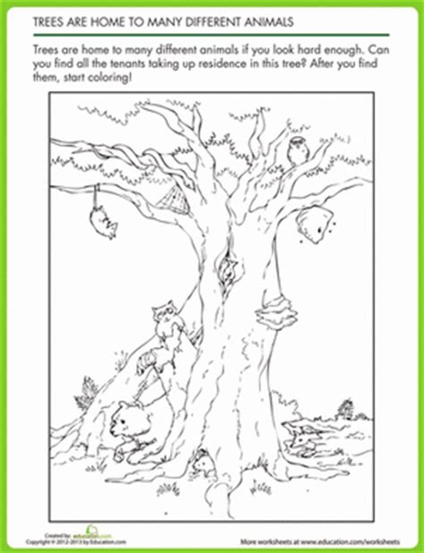 animal homes in trees worksheet education com