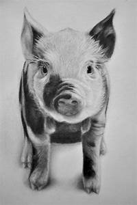 pigs drawing - Google Search | Pig Drawings | Pinterest ...