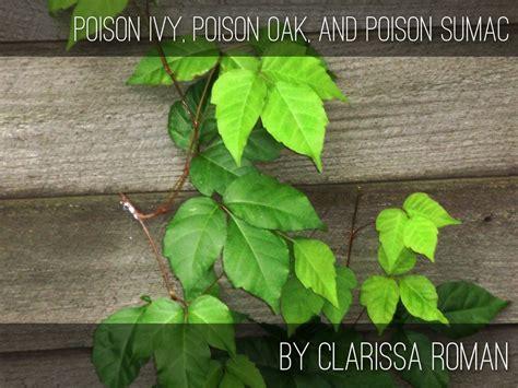 Poison Ivy Poison Oak And Poison Sumac By Clarissa