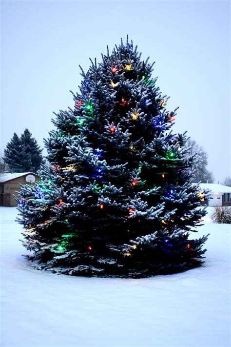 outside christmas tree lights how to install safety christmas lights on outdoor trees