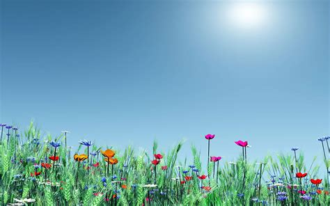 spring meadow flowers poppies nature hd wallpapers