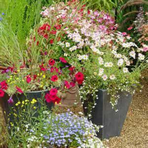 Full Sun Zone 5 Container Gardens Combine Petunias