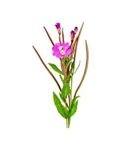 flower delievery organic moisturiser moisturiser for skin neal 39 s