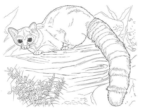 realistic coloring pages  animals tagged