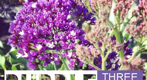 hardy winter cold season purple flowers  gardening  australia   garden magazine