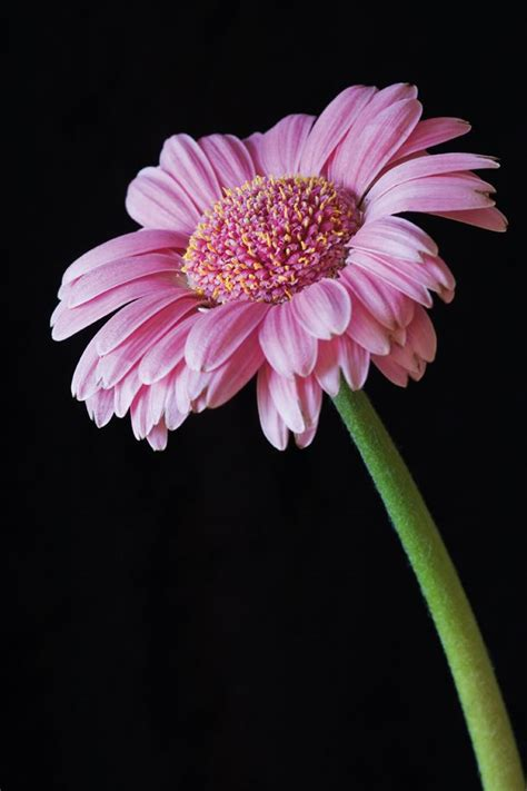 flower photography tips  beginners techradar