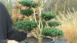 Buchsbaum Schablone Kaufen : buchsbaum buxus boxwood formschnitt youtube ~ Watch28wear.com Haus und Dekorationen
