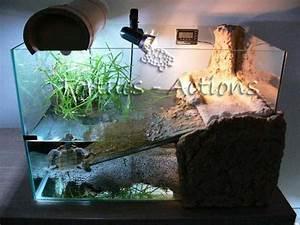 Idee Decoration Aquarium : id e d coration aquarium tortue ~ Melissatoandfro.com Idées de Décoration