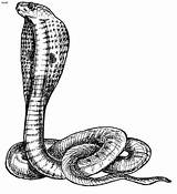 Coloring Snakes Pages Printable Filminspector sketch template