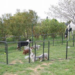Elevage de Berger Australien à Saint-Thibéry