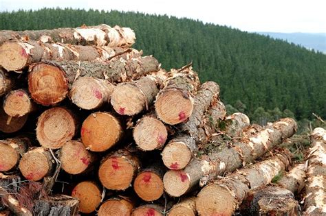 Timber sales | Forestry Corporation of NSW