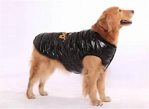 Video Pour Chien : habillez votre ami avec une doudoune pour chien ~ Medecine-chirurgie-esthetiques.com Avis de Voitures