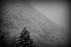 Imagen De Blanco Y Negro  Monta U00f1a  Nieve  Invierno  Pino