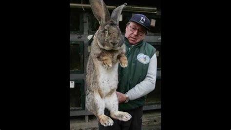 la vitrine des animaux top 10 anomalies des animaux
