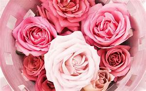 Pink Roses Tumblr - wallpaper.