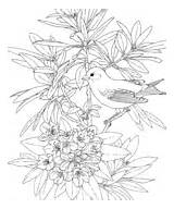 Goldfinch Coloring State Azalea Pages Washington Rhododendron Bird Eastern Iowa American Willow Printable Ies Colorings Birds Category sketch template