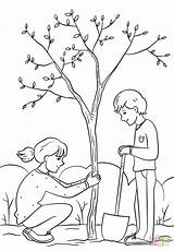 Planting Clipart Tree Draw Coloring Boy Drawing Colorare Albero Plantation Outline Kolorowanka Sadzenie sketch template
