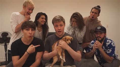 beds in sale puppy prank on roommates puppies