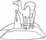Camel Coloring Printable Camels Caravan Sally Cliparts Insects Drawing Desert Cartoon Template Dromedary Popular Getdrawings Library Clipart Sheets Coloringhome Clip sketch template
