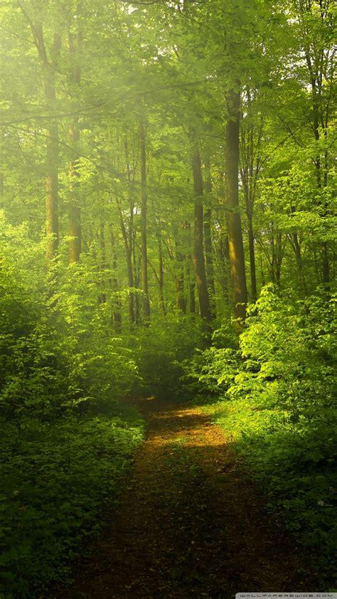 beautiful nature image green forest ultra hd desktop