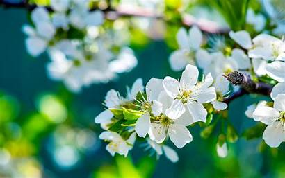 Desktop Flower Flowers Wallpapers Screen Apple Wide