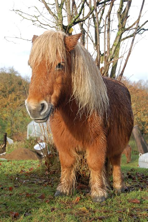 pony shetland story ponies findingourwaynow lessons horses funny wonder much well finding excitement fear understand shock doesn yourself kid come