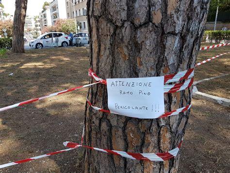 Sedi Ama Roma Manutenzione Verde 5 Bandi Per Le Sedi Ama E Nessuno