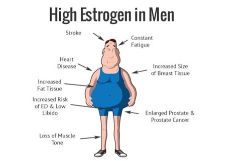 understanding estrogen  men alpha nation