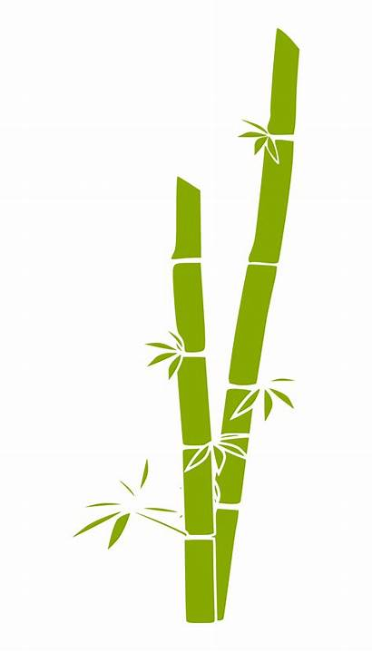 Bamboo Grass Clipart Tree 555px Clipartbest Vector