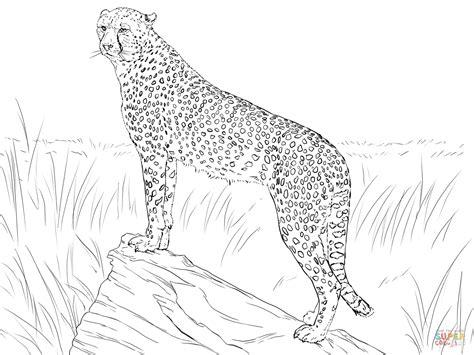 dibujo de guepardo observando  su presa  colorear