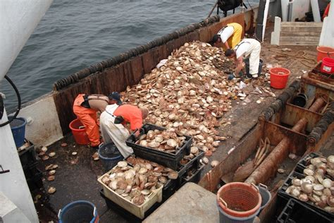 Scallop Boat by An Ounce Of Prevention Is Worth Tons Of Future Harvests