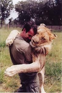 The Wild Hug : love animals hug lion human tiger elsrj ~ Eleganceandgraceweddings.com Haus und Dekorationen