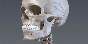 Skin Anatomy And Physiology Tutors For Anatomy And