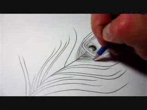 draw  peacock feather youtube