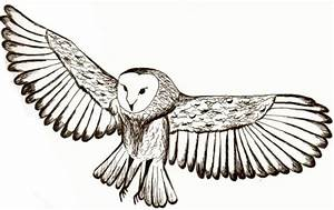 The gallery for --> Dove Tattoo Sketch
