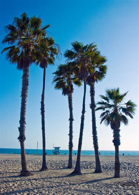 Palm Tree Beach Palm Tree Beach Scene, luxury home gardens