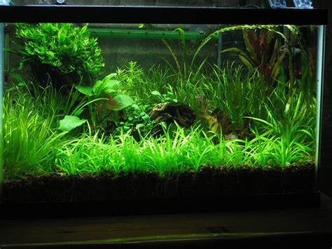 co2 system for planted aquarium a thomasi the basics of co2 injection for the planted aquarium