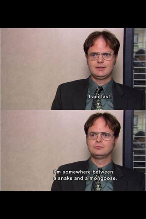 Funny Office Memes - 206 best images about dwight schrute on pinterest discover more ideas about the office dwight