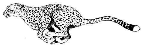cheetah coloring pages cheetah coloring pages to and print for free