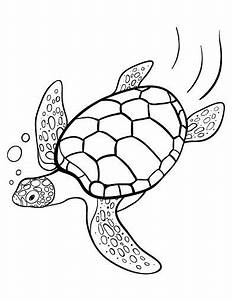 Printable Turtle Coloring Page Free Pdf Download At Http