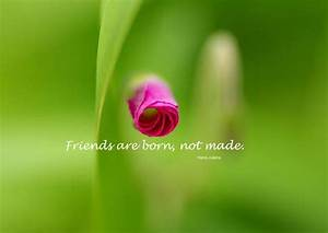ENTERTAINMENT: BEAUTIFUL FRIENDSHIP QUOTES IN OUR LIFE