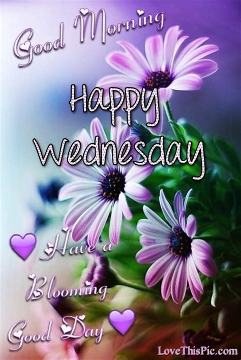 good morning happy wednesday   blooming good day