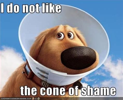 Shame Meme - cone of shame know your meme