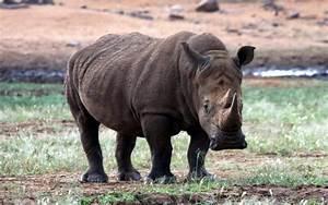 Pin Tiere Bilder Kostenlos On Pinterest