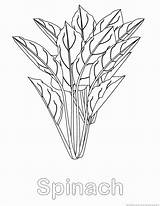 Spinach Vegetable Print 123coloringpages sketch template
