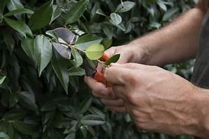 Comment Tailler Une Haie De Laurier : quels arbustes tailler en mars ~ Melissatoandfro.com Idées de Décoration
